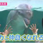 Rの法則!水族館デートの写真術やイルカと仲良くなる方法!ハロウィンも?【10月3日放送・見逃し】